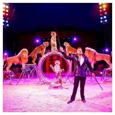 Ticket Zirkus Charles Knie günstiger kaufen